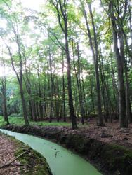 Ostsee Urlaub Waldbach