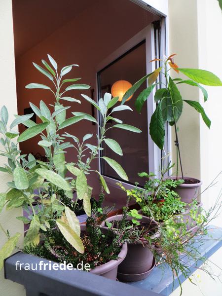 Pflanzen auf dem Fensterbrett
