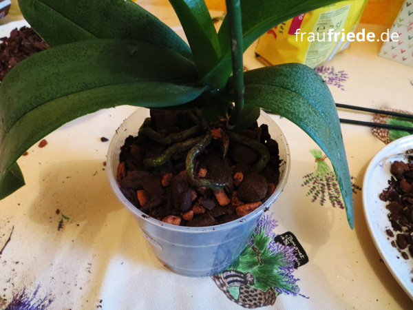 orchidee05